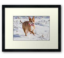 Happy Pit Bull Framed Print
