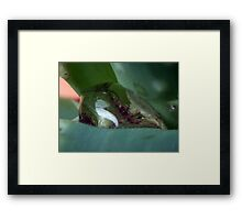 ©NS Drops Macro IA Framed Print