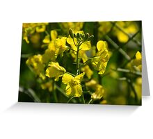 Canola in the Western Cape Greeting Card