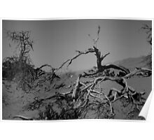 Death Tree Poster