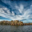 Animals on the Belle Chain Islets by toby snelgrove  IPA