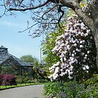 Springtime at Glasgow Botanic Gardens by ElsT