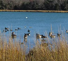Ducks and pond by GleaPhotography