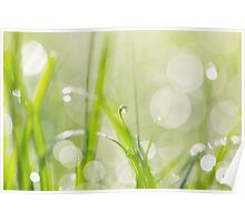 Dewdrops in Sunlit Grass 2 Poster