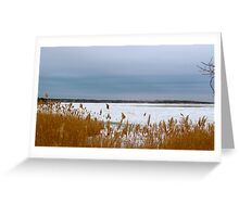 Snow and beach grass Greeting Card