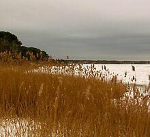 Beach grass and Snow by GleaPhotography