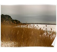 Beach grass and Snow Poster