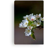 Radiant Blossoms Canvas Print