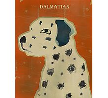 the dalmatian  Photographic Print
