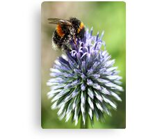 Dusted with pollen Metal Print