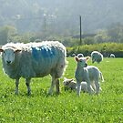 Spring Lamb by mikebov
