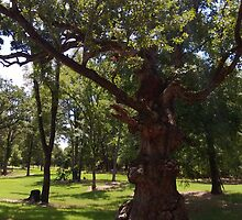 Gnarled Tree by MIKE DEVANEY
