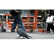 Just a Pigeon in the Big City Photographic Print