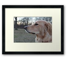 Dog/ Hovawart Framed Print