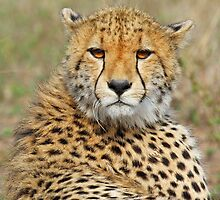 A Cheetah Cub by jozi1