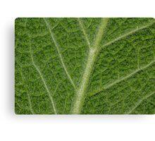 Salvia Leaf Canvas Print
