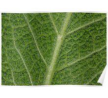 Salvia Leaf Poster
