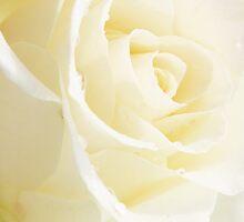 Petals in the Light by TangerineOrange