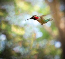 Hummingbird Dive Bomber by Corri Gryting Gutzman
