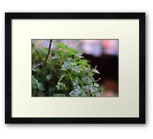 Crab Flower Framed Print
