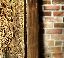 16.4.2014: Mushrooms in the Cellar by Petri Volanen