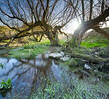 Swallowhead Spring Holy Well by Angie Latham