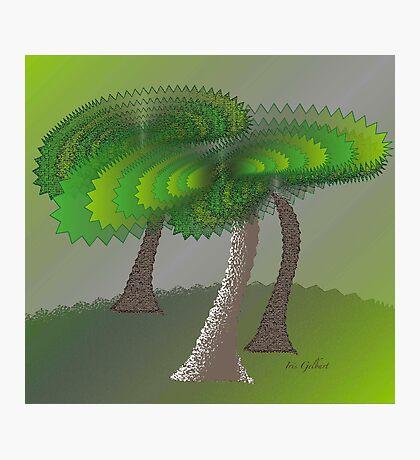 Green Scene Photographic Print
