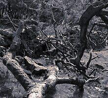 Trees, Dane (4) by Mikhail31