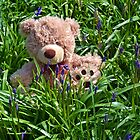 Teddy In The Bluebells by lynn carter