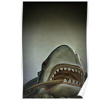 Shark, Santa Cruz, California Poster