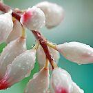 Tropical Flowers Macro by Leon Heyns