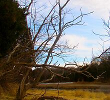 Salt Pond Trees by GleaPhotography