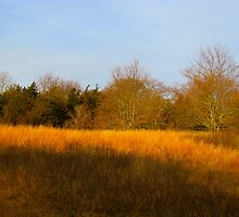 Land and grass 2 by GleaPhotography