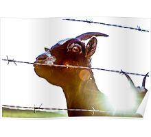 Mornin', goat. Poster