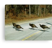 Turkeys crossing the Road Canvas Print