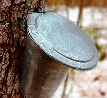 Close up a maple syrup bucket to the woods by Kelly  McAleer