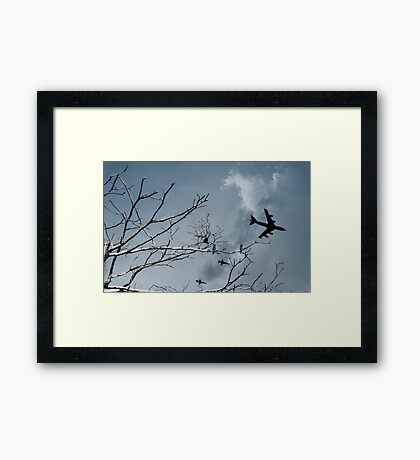 Kingfishers and Planes Framed Print
