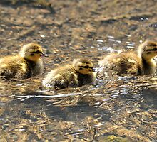 """"""" Swimming Lesson In The Sun """" by Richard Couchman"""