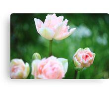 Bokeh Tulips Canvas Print