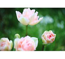 Bokeh Tulips Photographic Print