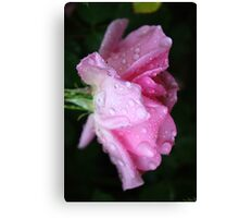 Rose to Victory - - over Breast Cancer Canvas Print