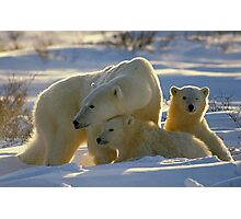 Polar Bear Mother And Cubs Portrait Photographic Print