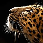 Amur Leopard Portrait by Oldetimemercan