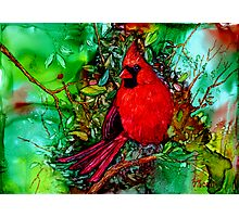 Cardinal In the Tree Photographic Print