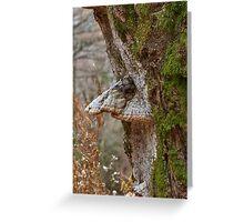 Woodland creatures Greeting Card