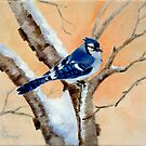 Blue Jay at Sunset by Brenda Thour