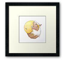 Guinea Pig & Orange Framed Print