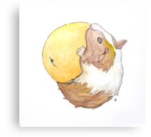 Guinea Pig & Orange Canvas Print