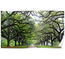 Live Oaks at Boone Hall Poster