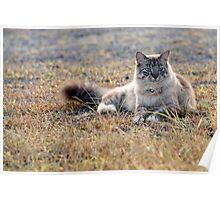 Chino cat! Poster